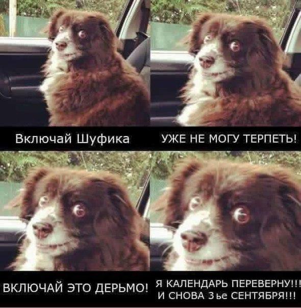 Фото №456268727 со страницы Станислава Превезенцева