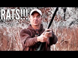 Hunting Texas Rats at night with Gamo Air Rifles