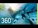 360° Tiger Shark Encounter in the Bahamas | SharkFest