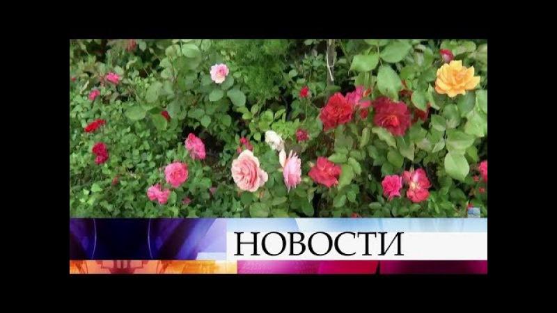 ВМоскве проходит вкусный ияркий фестиваль— «Московское лето. Цветочный дже ...