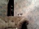 Бес вселился в кошку - Ржака. Часть 1 :) Crazy cat