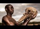 The 'Pangolin Men' Saving The World's Most Trafficked Mammal