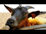 Кормим животных Парк Развлечений и отдыха в Бельгии Идем в местный магазинчик Р ...