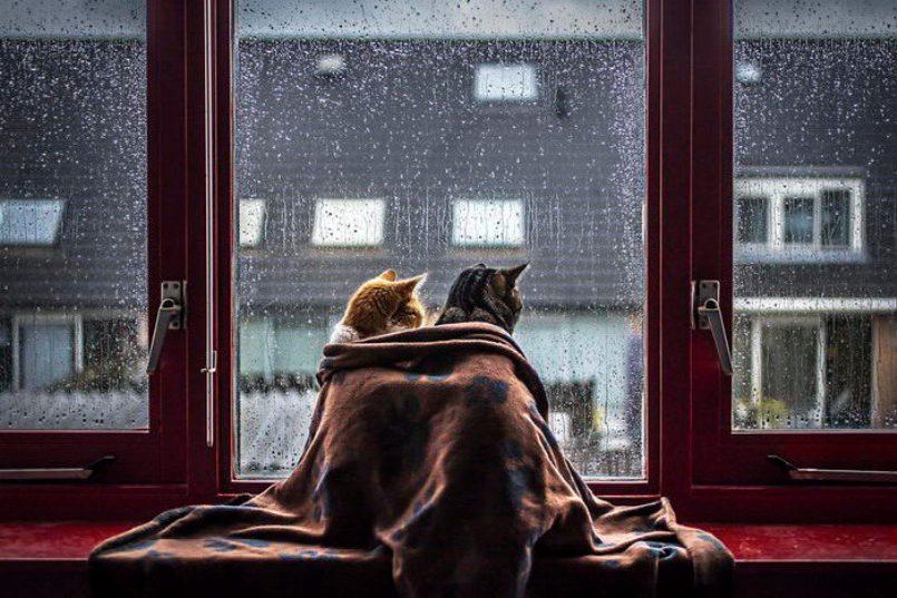 Коты и дождь. Лиричный проект фотографа Felicity Berkleef