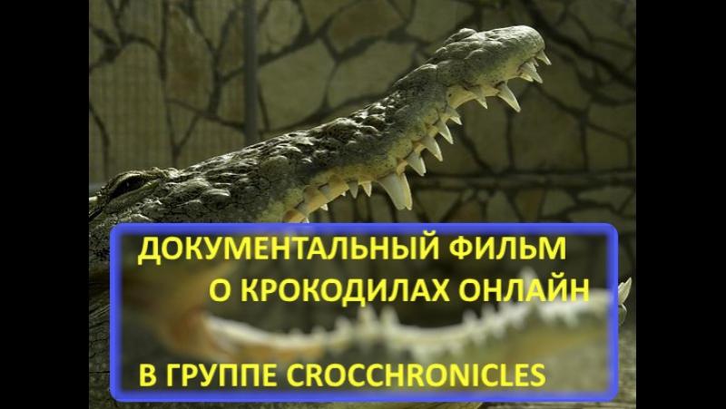 Документальный фильм NatGeoWild - самый большой крокодил