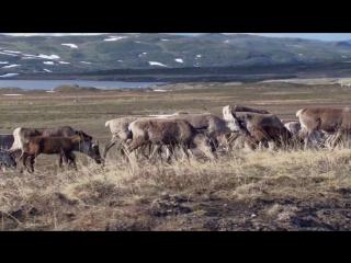 BBC: Жизнь. Серия 3. Млекопитающие (2009)