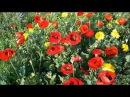 Вальс цветов Чайковского / The Waltz of Flowers by Tchaikovsky