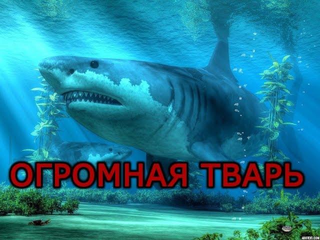 || FISH FEED AND GROW || ОГРОМНАЯ БЕЛАЯ АКУЛА /ОБЗОР ОБНОВЛЕНИЯ