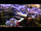 Monster Giant Squid(full documentary)HD