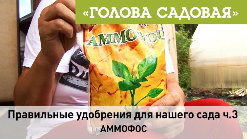 Голова садовая - Правильные удобрения для нашего сада ч.3 (Аммофос)