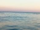 2.Дельфины и люди п.Волна 01.08.2017г