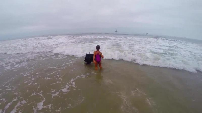 Собака не пускает свою маленькую хозяйку к большим волнам