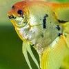 Artemida Krit