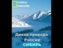 Дикая природа России. Сибирь. Серия 3 Германия 2008