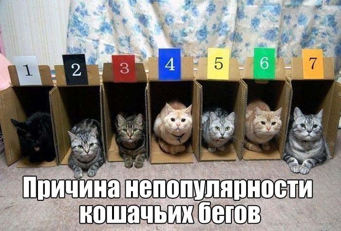 https://pp.userapi.com/c837527/v837527409/3d28d/q6vKbo4MxW4.jpg