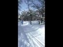 Прогулка на лыжах. Зимний лес