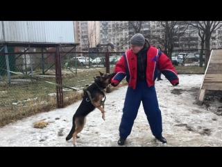 Собаки-барабаки и агрессивный очкарик
