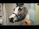 Cheval aux pastels Horse in pastel by SKYZUNE ART
