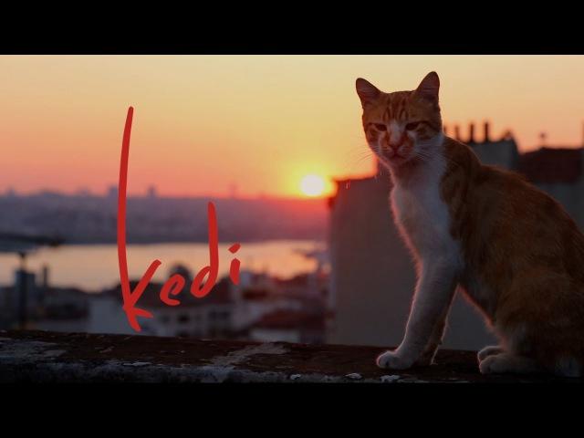 Kedi - Trailer (2017) 1080p Full HD