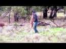 Man punches kangaroo in the face to save dog being strangled