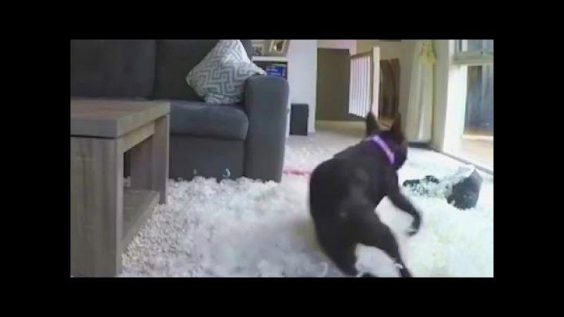 Хозяева в шоке - собака осталась одна дома.