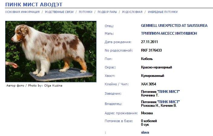 База данных по австралийским овчаркам в России - Страница 18 Pt39e-HcOoY