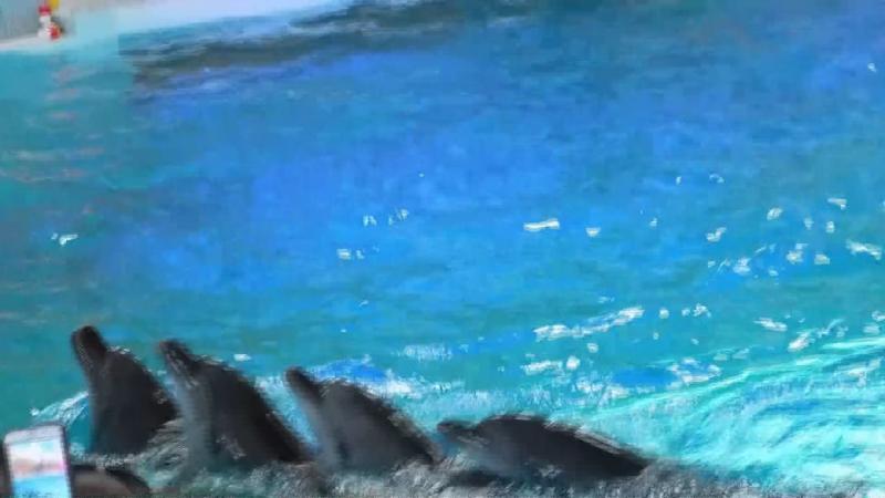 Дельфінарій Оскар м.Трускавець