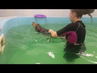 как лучше плавать для похудения