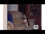 топ 10 смешных собак