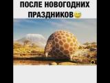 Последствие Оливье и Селедки под шубой!))))