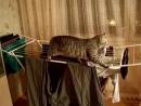 Кот пытается стащить белье