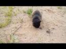 охота на мышь 2