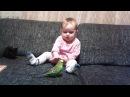 Кошка попугай и ребёнок karina t5 151