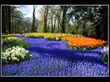 ВИА Надежда Земля цветов