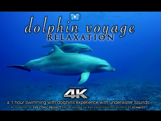 4K DOLPHIN VOYAGE Relaxation Music | 1 HR Healing Nature Video w/ Binaural Sounds for Meditation