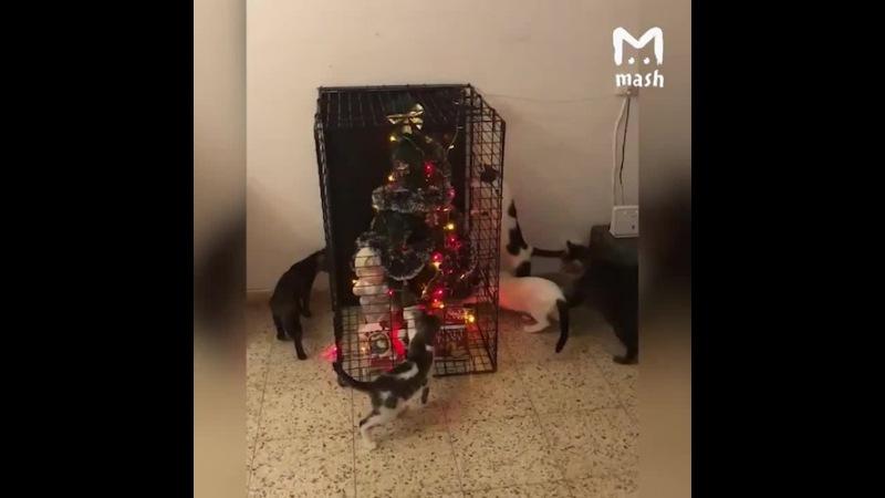 Cats vs new year tree