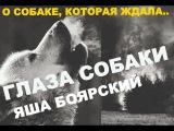 Яша Боярский ГЛАЗА СОБАКИ, слова и музыка Яша Боярский