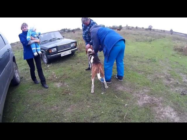 Пегая русская гончая Пса пристроили