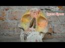 Виктор Цой (Кино) - Группа крови   кавер (скрипка и пианино)