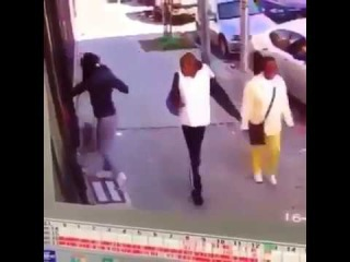 Хозяйку, которая едва не задушила собаку, спасая её от кота, высмеяли в Сети