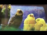 Ручной Зоопарк (Реклама)