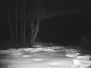 В Приморье переход леопарда над экодуком впервые попал на видео