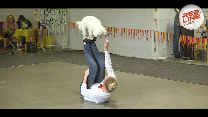 Артистичные собаки