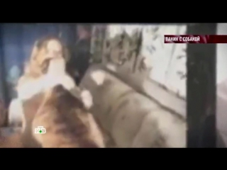 Порно видео с паниным
