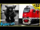 Веселые коты Приколы с котами на железной дороге