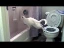 Приколы с котами 1 - Свежая подборка 2017