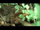 Спасатель змей 02 серия Крокодилы каннибалы Snake Crusader with Bruce George 2008