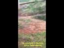 Булли кутта VS кавказская овчарка