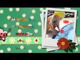 Божья коровка - детское слайд шоу на заказ