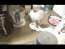 пол неохота мыть это сделает кот